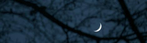 luna dal bosco