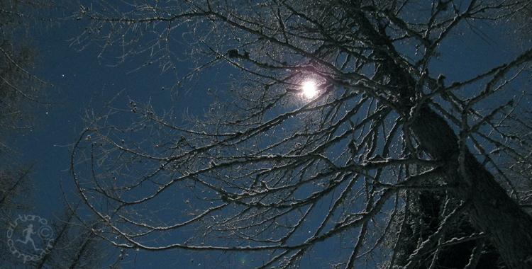 Chiaro di luna cristiano campestrin - Il giardino al chiaro di luna ...