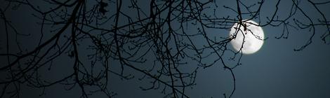 Lunario di Dicembre